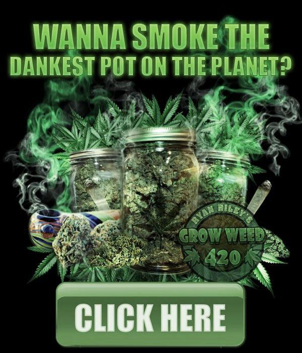 growing-elite-marijuana