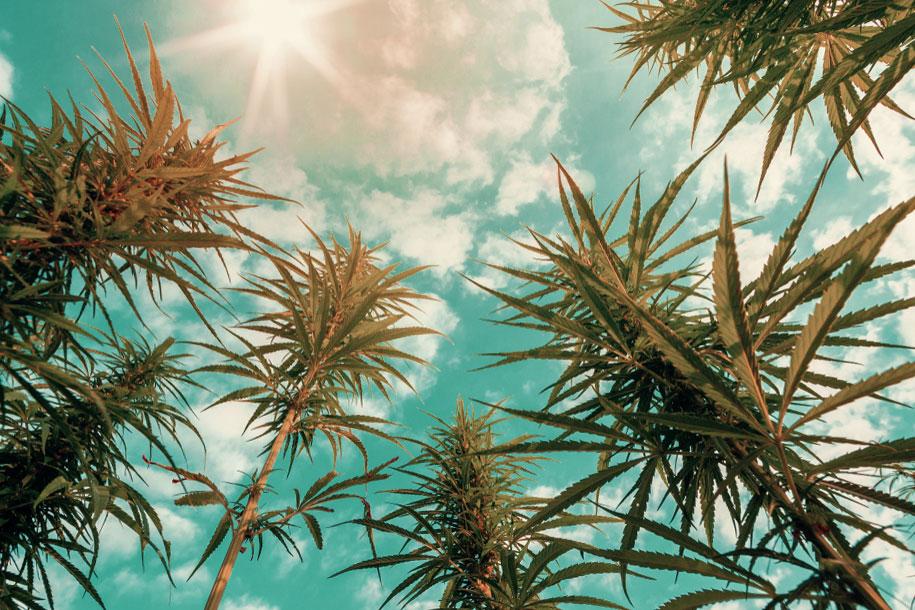 marijuana-ads